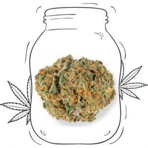 Strawberry cbd erba legale Fragola Cannabis light CBD