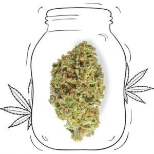 erba legale purple CBD cannabis